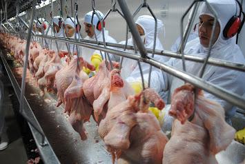 Geiz ist geil?! Ausbeutung in der Fleischindustrie